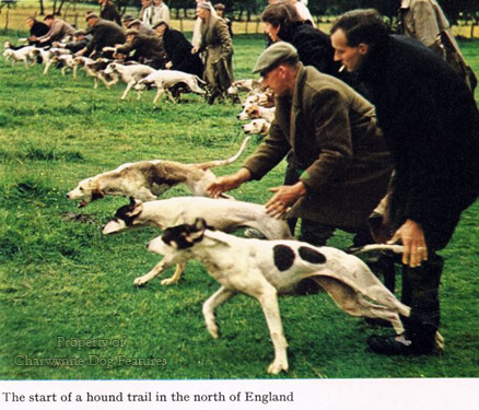 Trail hound