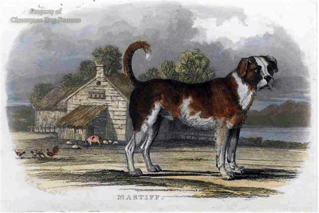 HUNTING DOWN THE MASTIFFS OF ENGLAND
