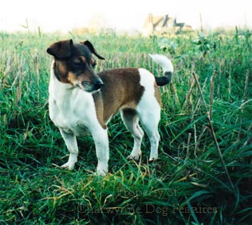 an introduction to the issue of hunting dogs Issue date 1994-11 url introduction the central kalahari san (gilana and g/wi) hunting with dogs among the san in the central kalahari.